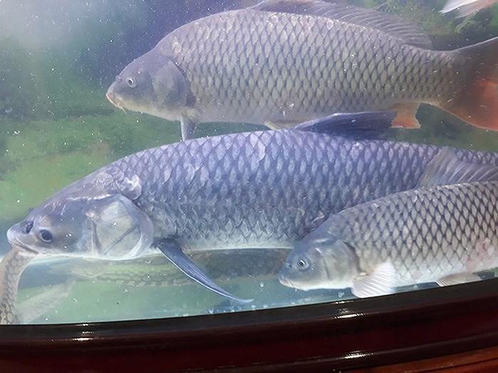 Hội chợ giới thiệu các loài cá đặc sản của Việt Nam ảnh 1