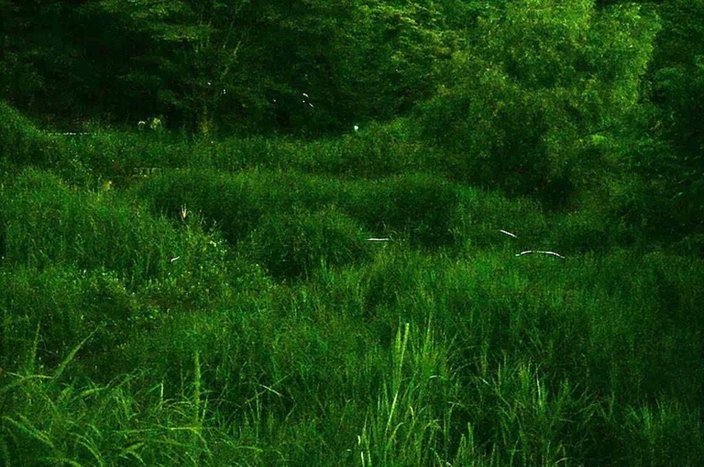 Khám phá 'thiên đường' Fuefuki - Kỳ 3: Ông già đom đóm Ảnh 6