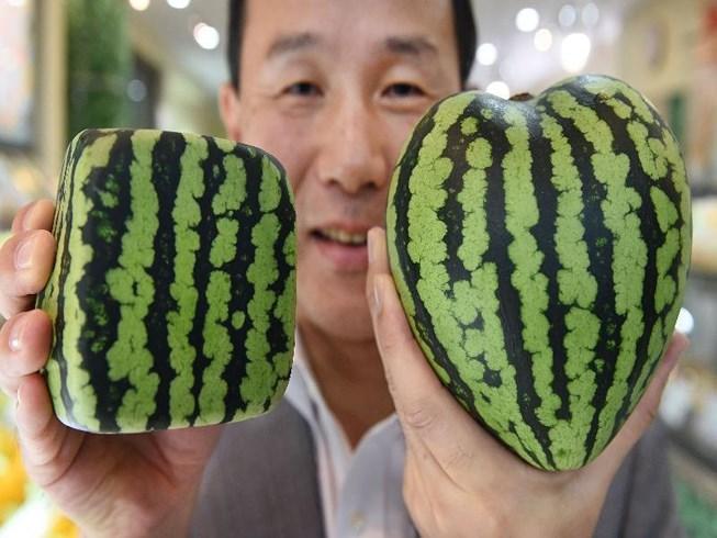 220 triệu đồng/chùm nho: Vì sao người Nhật làm được? Ảnh 1