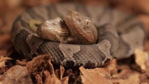 Phát hiện rắn hai đầu cực hiếm ở Mỹ Ảnh 1