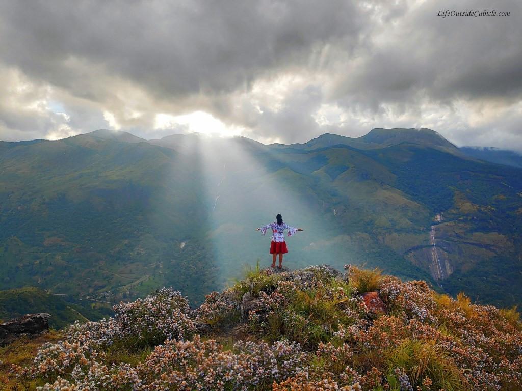 Thung lũng ngập màu tím biếc của sắc hoa 12 năm nở một lần Ảnh 10