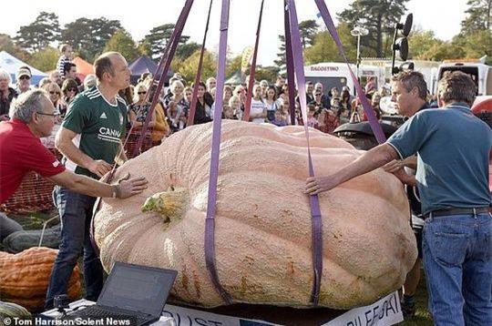 Cận cảnh quả bí ngô nặng 1103 kg Ảnh 4