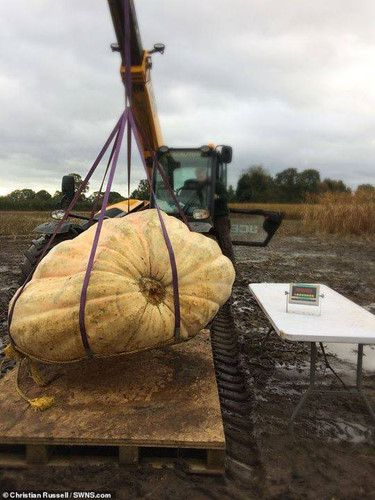 Cận cảnh quả bí ngô nặng 1103 kg Ảnh 1