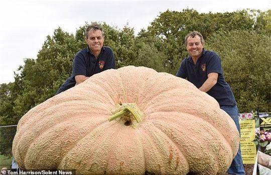 Cận cảnh quả bí ngô nặng 1103 kg Ảnh 2