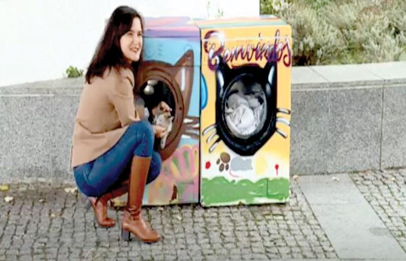 Biến máy giặt thành nhà cho mèo hoang Ảnh 1