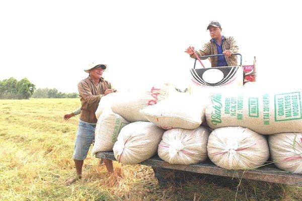 Philippines tiếp tục mở thầu nhập 500.000 tấn gạo 25% tấm Ảnh 1