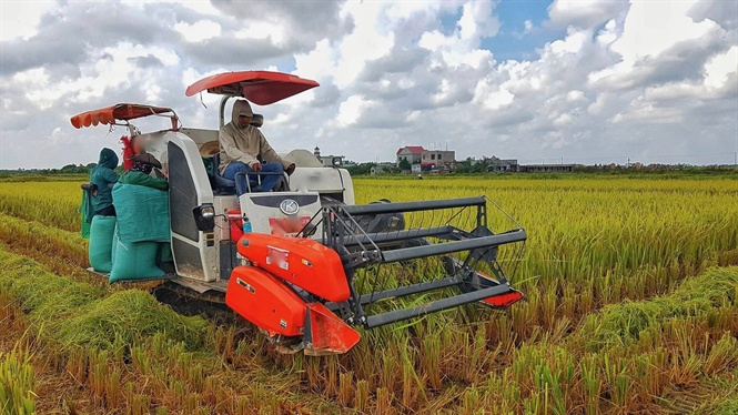 Năm 2018, trồng lúa thắng lợi toàn diện Ảnh 3