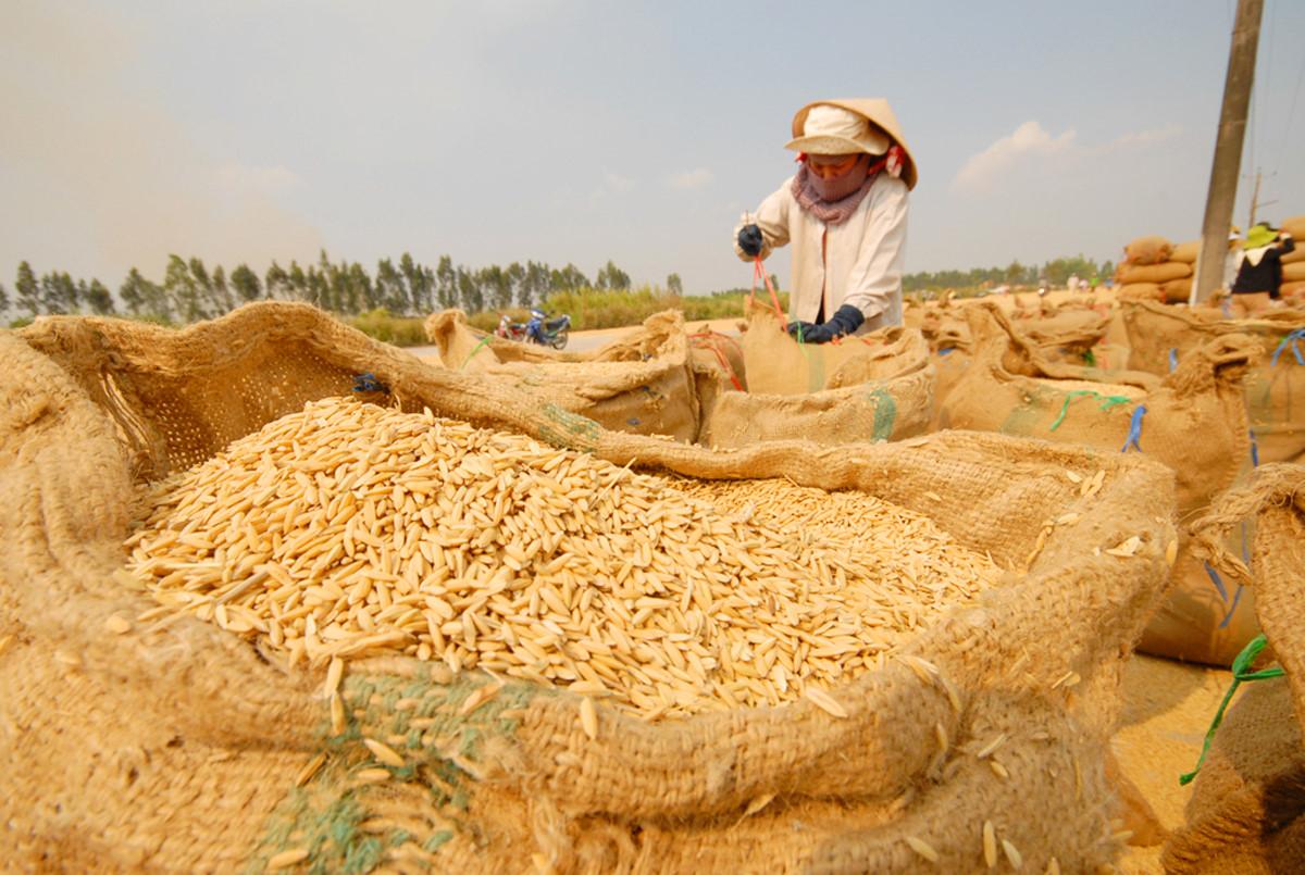 'Logo thương hiệu gạo Việt' sẽ công bố vào giữa tháng 12 Ảnh 1