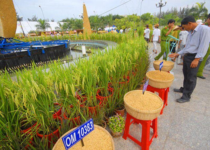 Lần đầu tiên công bố có logo thương hiệu gạo Việt Ảnh 1