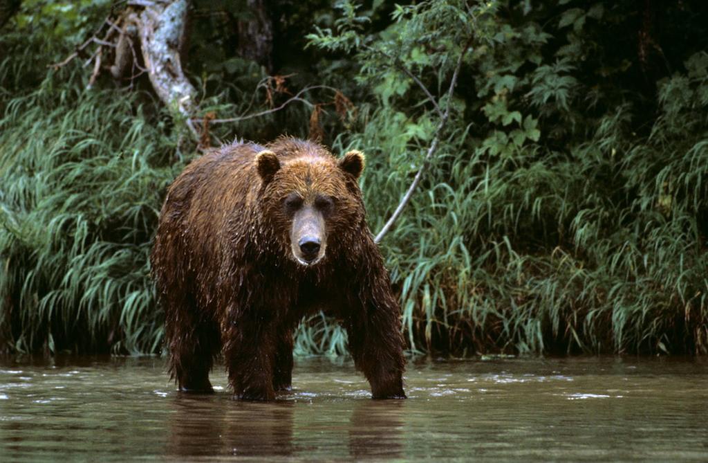 Thiếu niên 15 tuổi hy sinh cứu em bị gấu tấn công Ảnh 1