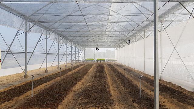 'Lão khùng' kỹ sư xây dựng rẽ ngang, khởi nghiệp trồng rau sạch Ảnh 5