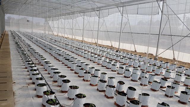 'Lão khùng' kỹ sư xây dựng rẽ ngang, khởi nghiệp trồng rau sạch Ảnh 4