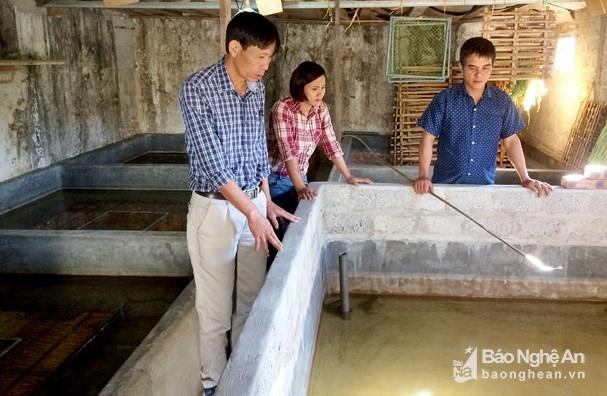 Nông dân Nghệ An nuôi lươn không bùn trong bể xi măng Ảnh 1