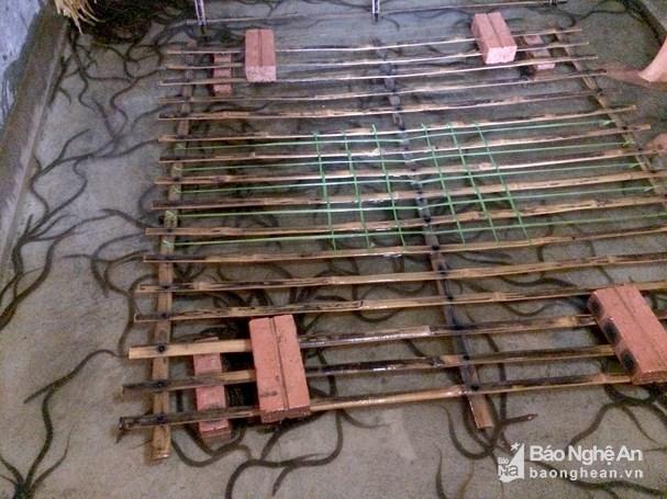 Nông dân Nghệ An nuôi lươn không bùn trong bể xi măng Ảnh 2