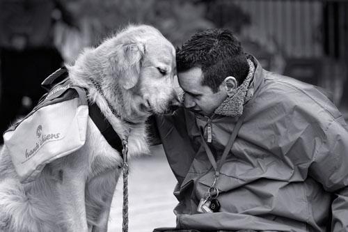 Chó có thể phân biệt được người tốt, kẻ xấu Ảnh 1