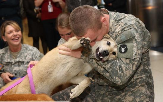 Chó có thể phân biệt được người tốt, kẻ xấu Ảnh 2