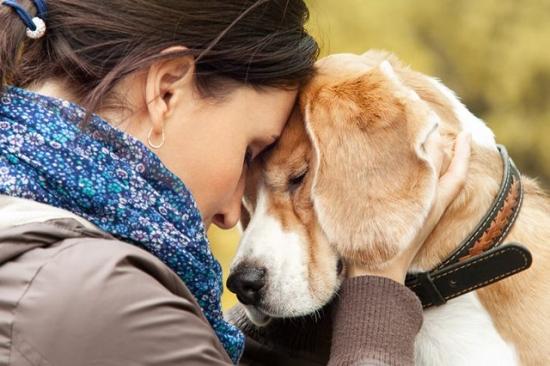 Chó có thể phân biệt được người tốt, kẻ xấu Ảnh 3