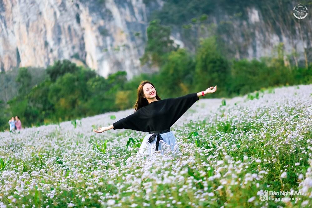 Đến Nghệ An mùa đông ngắm những 'thiên đường' hoa Ảnh 3