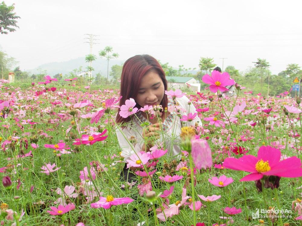 Đến Nghệ An mùa đông ngắm những 'thiên đường' hoa Ảnh 5