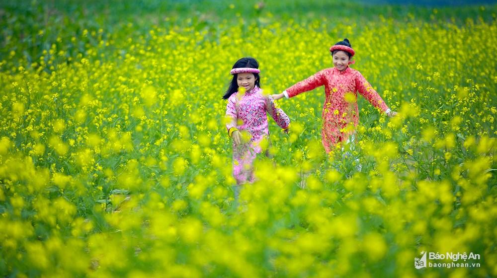 Đến Nghệ An mùa đông ngắm những 'thiên đường' hoa Ảnh 4