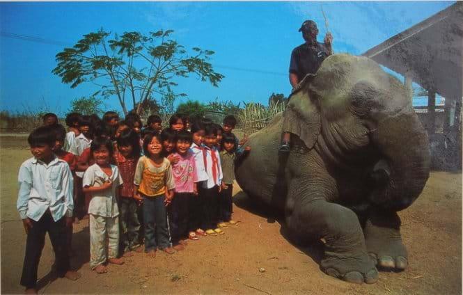 Tây Nguyên cam kết bảo vệ thú rừng Ảnh 1