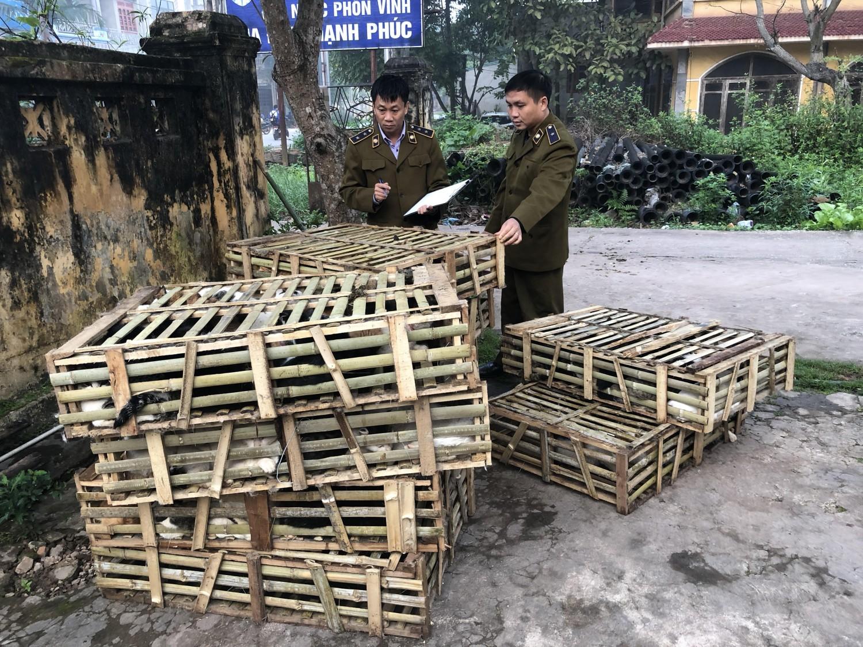 Bắt giữ xe chở gần 1 tấn mèo nhập lậu từ Trung Quốc Ảnh 1