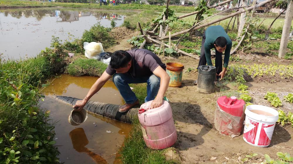 Sự cố dầu tràn ở Thanh Hóa: Cây héo rũ, cá tôm chết nổi đầy đồng Ảnh 6