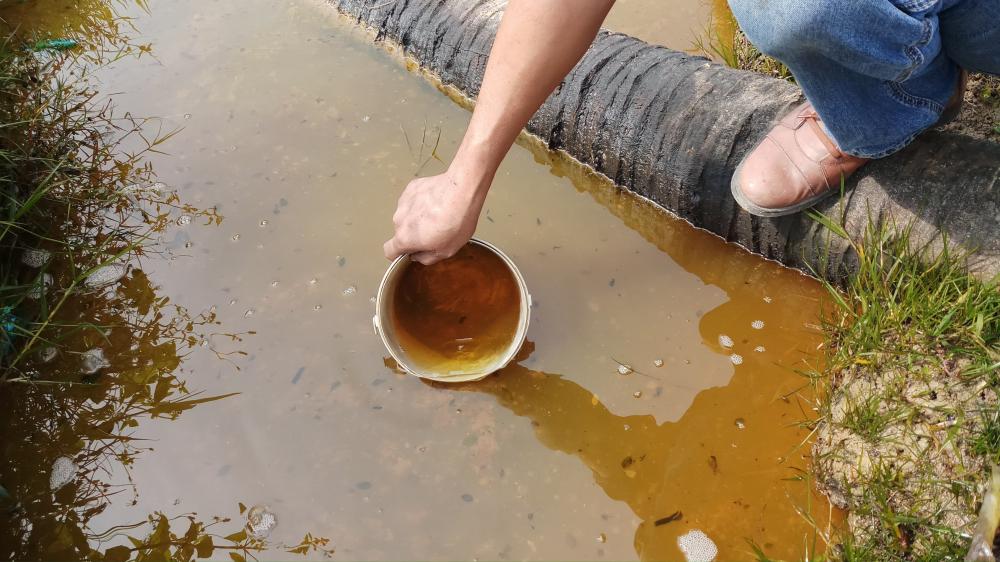 Sự cố dầu tràn ở Thanh Hóa: Cây héo rũ, cá tôm chết nổi đầy đồng Ảnh 4