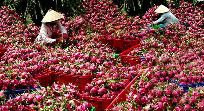 Trung Quốc siết chặt, cấm cửa: Lời cảnh báo gửi tới Việt Nam Ảnh 2