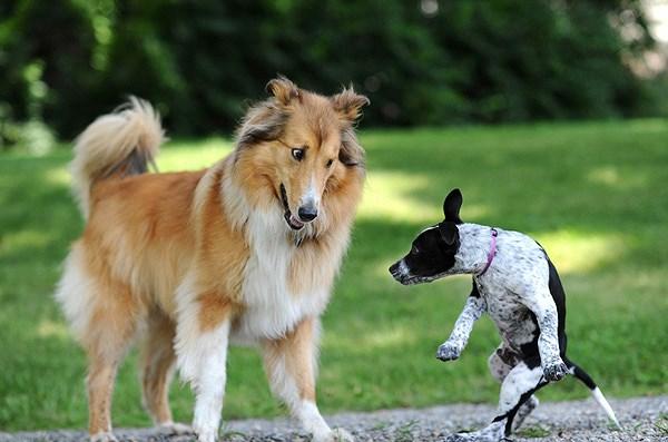 10 cách các chú chó thể hiện sự đáng yêu với bạn Ảnh 9