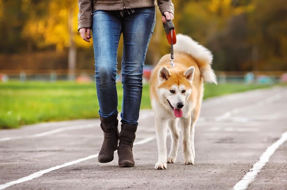 10 cách các chú chó thể hiện sự đáng yêu với bạn Ảnh 6
