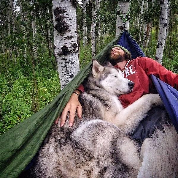 10 cách các chú chó thể hiện sự đáng yêu với bạn Ảnh 7