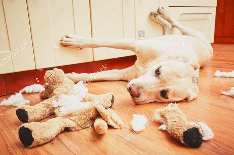 10 cách các chú chó thể hiện sự đáng yêu với bạn Ảnh 3
