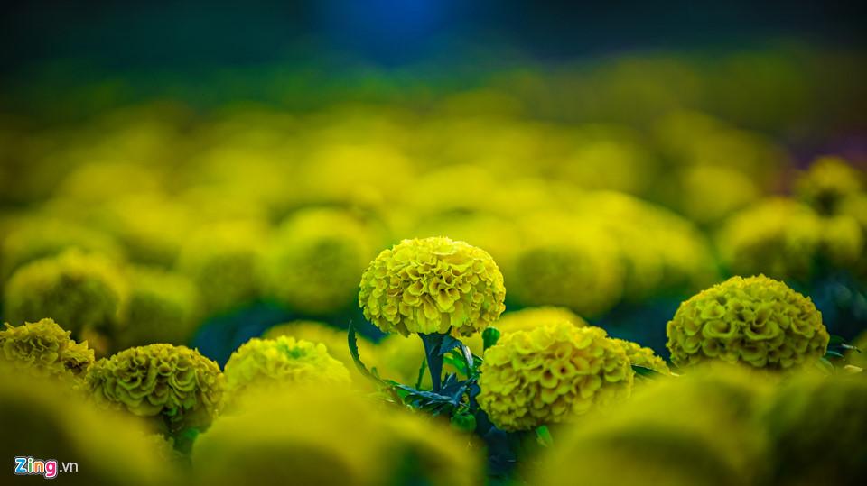 Chiêm ngưỡng 'cúp vô địch' bằng hoa khổng lồ cổ vũ ĐT Việt Nam tại Asian Cup Ảnh 4