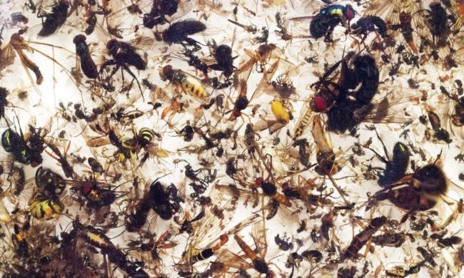 Côn trùng đối mặt nguy cơ tuyệt chủng, hệ sinh thái sẽ bị phá hủy Ảnh 1