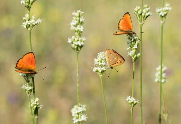 Côn trùng đối mặt nguy cơ tuyệt chủng, hệ sinh thái sẽ bị phá hủy Ảnh 2