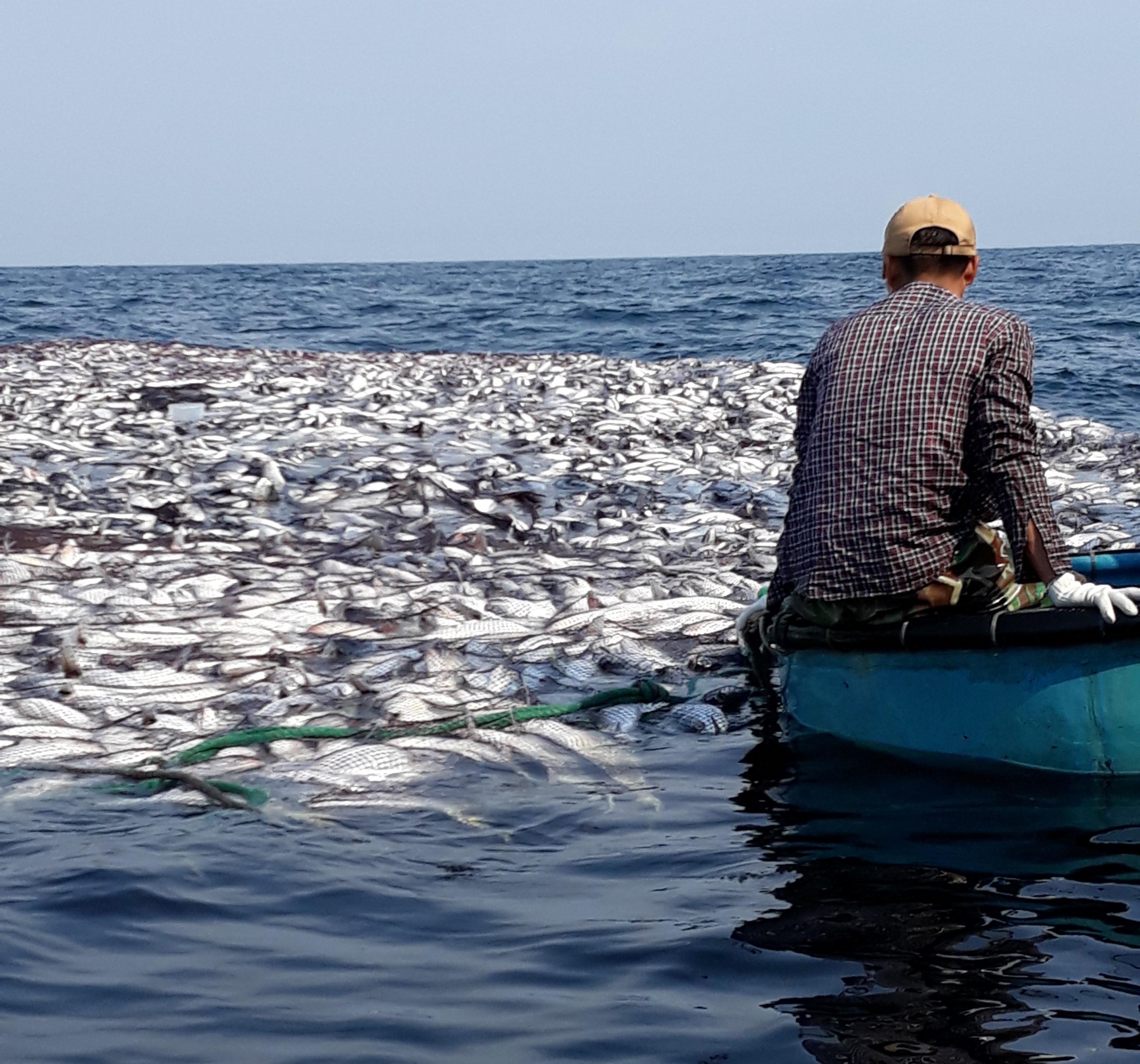 Cận cảnh mẻ cá 120 tấn trên biển, cả chục ngàn con chờ đánh bắt Ảnh 6