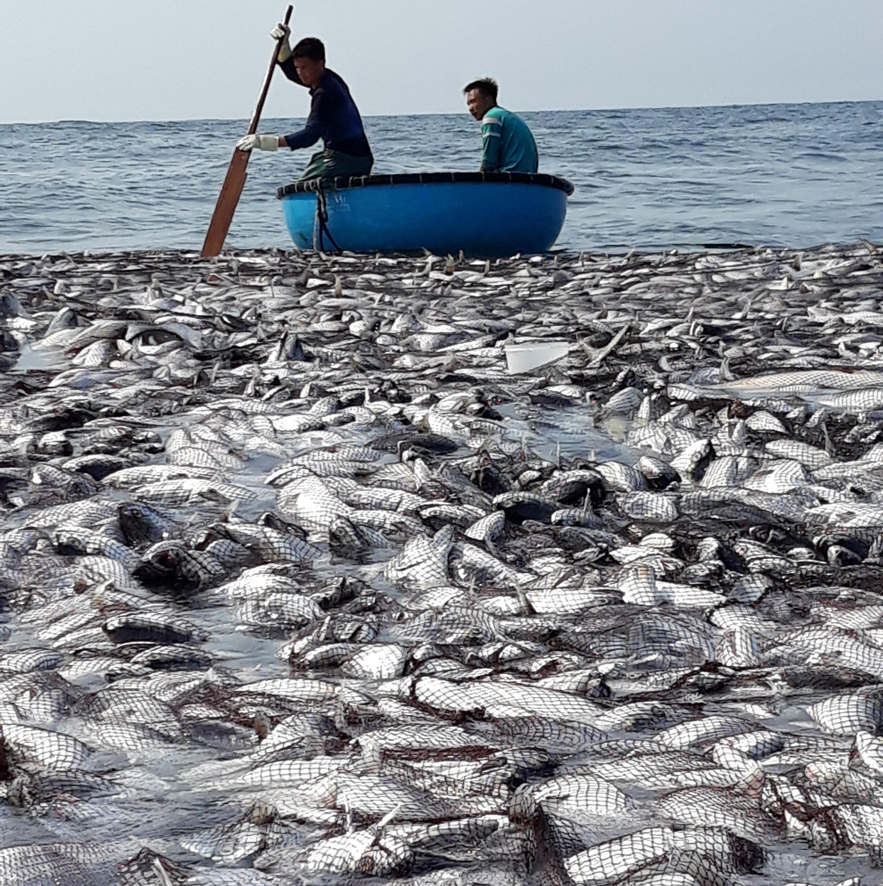 Cận cảnh mẻ cá 120 tấn trên biển, cả chục ngàn con chờ đánh bắt Ảnh 5