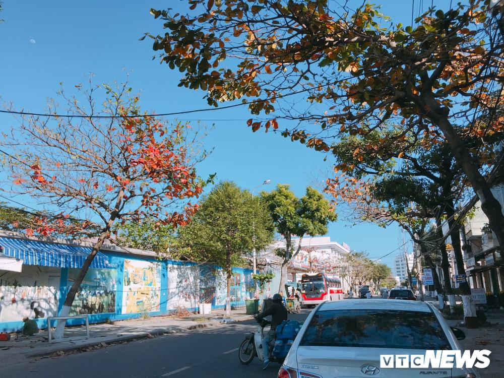 Đẹp ngỡ ngàng mùa bàng thay lá ở Đà Nẵng Ảnh 1
