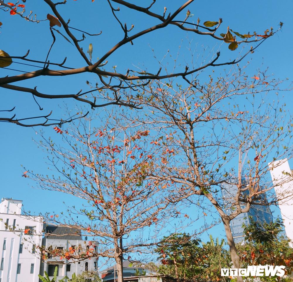 Đẹp ngỡ ngàng mùa bàng thay lá ở Đà Nẵng Ảnh 3