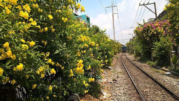 Hai bên đường tàu ngập tràn sắc hoa ở TPHCM gây 'sốt' Ảnh 14