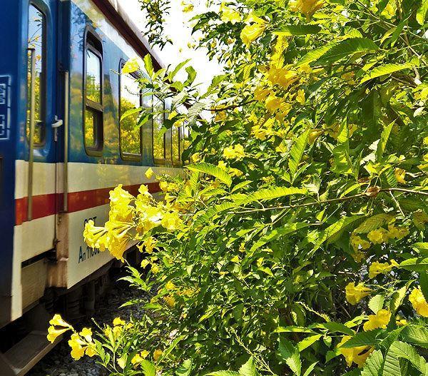 Hai bên đường tàu ngập tràn sắc hoa ở TPHCM gây 'sốt' Ảnh 13