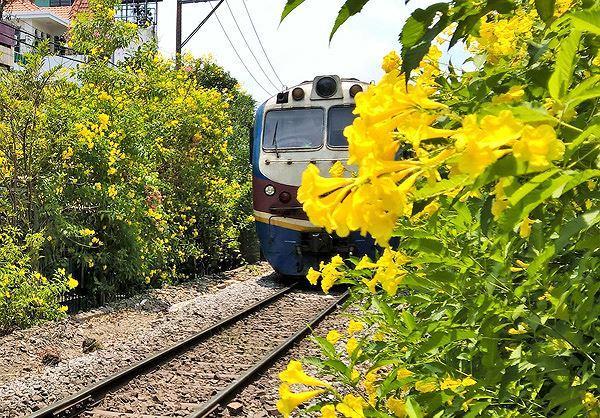 Hai bên đường tàu ngập tràn sắc hoa ở TPHCM gây 'sốt' Ảnh 12