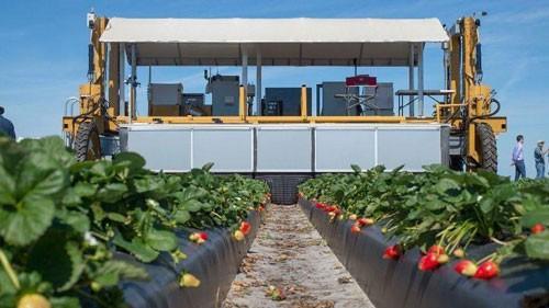 Robot triệu USD hái trái cây Ảnh 2