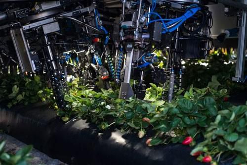 Robot triệu USD hái trái cây Ảnh 1