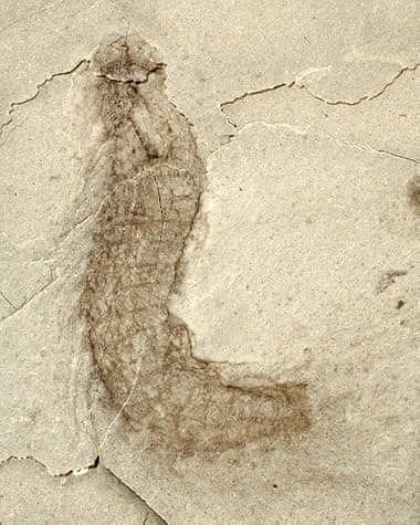 Sửng sốt với hóa thạch hơn 500 triệu năm tuổi tại Trung Quốc Ảnh 4