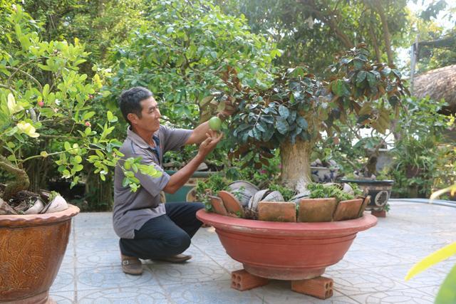 Lạ mà hay: Ở nơi này, dân kiếm bộn tiền nhờ bonsai xoài, vú sữa Ảnh 2