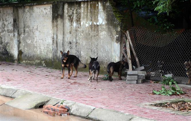 Xử lý nghiêm các trường hợp nuôi chó thả rông không đúng quy định Ảnh 1