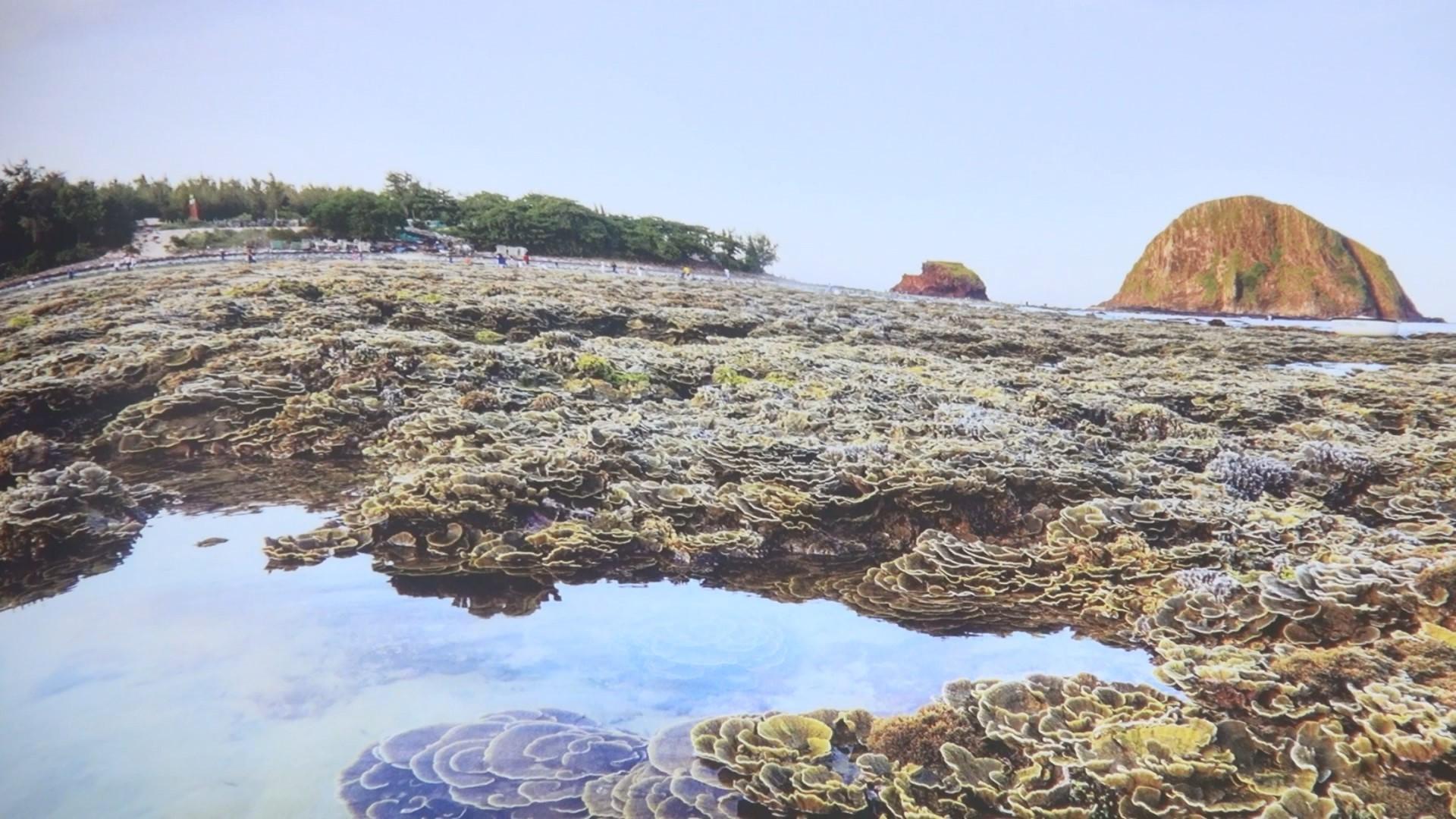Rạn san hô Hòn Yến muốn đẹp, du khách nhớ 'nhẹ chân' giúp! Ảnh 4