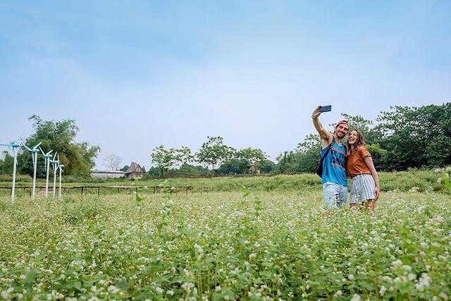 Mãn nhãn vườn hoa tam giác mạch gần 1 ha ở Hà Nội 'hút' khách tham quan Ảnh 7